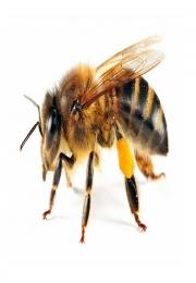 Acil traz palestra sobre proteção das abelhas e a importância delas para a humanidade