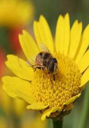 Acil envia Ofício à FACESP solicitando apoio a causa da mortandade de abelhas e fiscalização no uso de agrotóxicos