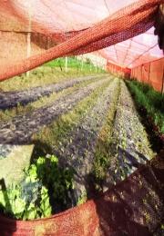 APRUL realiza visita técnica à Fazenda Riata