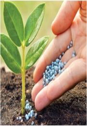 A dinâmica do mercado de fertilizantes e Cenário de Apólices de Seguro Rural entre 2014 e 2015 (Boletim GEAgro)